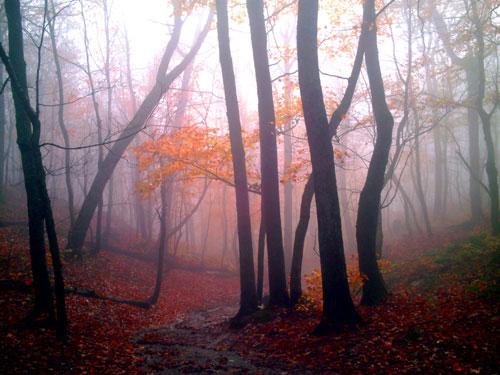mist-woods